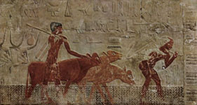 Domesticated cattle in ancient Egypt