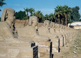 Avenue of sphinx leading to Luxor temple (copyright hajor)